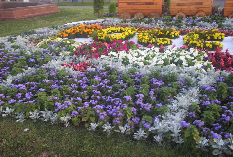 Цветы для палисадника фото с названиями